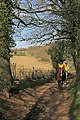 Bridleway going from Whiteparish to Dean Hill - geograph.org.uk - 368429.jpg