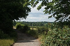 Bridleway on Fetcham Downs - geograph.org.uk - 1394767.jpg
