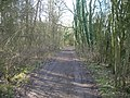 Bridleway through Halloughton Wood - geograph.org.uk - 1760073.jpg