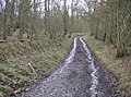 Bridleway towards Rushall Copse - geograph.org.uk - 358442.jpg