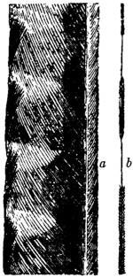 Britannica Lyre-bird Exterior Feathers.png