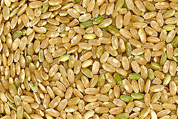 grains of brown rice, a staple food