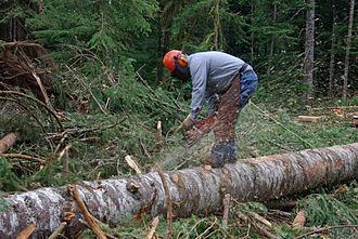 Log bucking - Bucker measuring and swamping or knot bumping