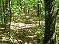 Burlington, CT, USA - panoramio (1).jpg