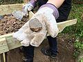 Burned plaster from Eutaw House, Herring Run Park Archaeology (17378266149).jpg