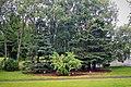 Bush and trees at Reykjavík botanical garden.jpg