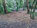 Bushy Park, Dublin -146429 (45754694424).jpg