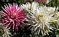 Butchart Gardens (8036295029).jpg