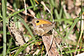 Butterfly - Anglesey August 2009 (3857270776).jpg