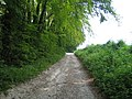 Byway near Broughton Down 1 - geograph.org.uk - 463883.jpg