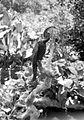 COLLECTIE TROPENMUSEUM Slangenhalsvogel (Anhinga anhinga melanogaster) TMnr 10006507.jpg