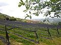 COSTIGLIOLE SALUZZO - Percorso collinare via dei poeti del territorio - panorama nei pressi di Casa Abello.JPG
