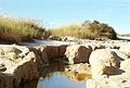 CSIRO ScienceImage 129 A Water Pool in a Salinity Affected Area.jpg