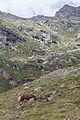 Cabalo no alto da Coma. Andorra 298.jpg
