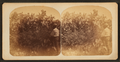 Cactus near Gali(...) Tex, from Robert N. Dennis collection of stereoscopic views.png