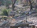 Cadereyta Botanical garden (5761435490).jpg
