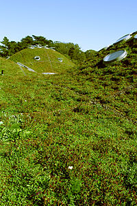 A modern green roof (California Academy of Sciences). Constructed for low maintenance by intentionally neglecting many native plant species with only the ... : plant roofs - memphite.com