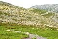 Camino - panoramio (37).jpg