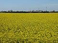 Campo nei pressi del canale Ferrara - panoramio.jpg