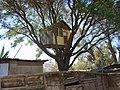 Casa en el árbol en Tierra Amarilla - panoramio.jpg