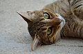 Cat 1 ms.jpg