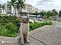 Cat pause 1.jpg