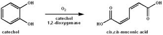 Catechol dioxygenase - Image: Catachol dioxygenase reaction