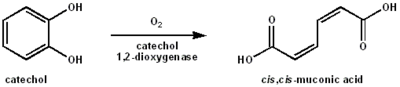 Catachol-dioxygenase-reaction.png