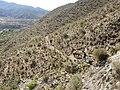 Catamarca Sección Pucará del Aconquija, Foto 1 (14983177195).jpg
