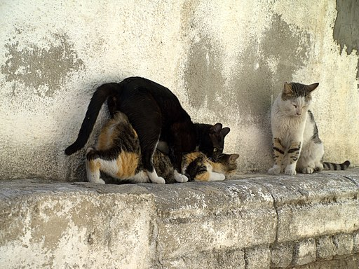 Cats having sex in Israel