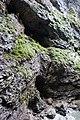 Caves in ravine (25050327515).jpg