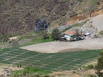 Chíquiza - Image: Chíquiza cebolla