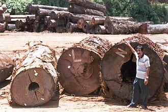 Neobalanocarpus - Chengal in a sawmill in Terengganu state, 2003