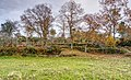 Chestnut Trees (187121375).jpeg