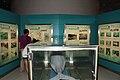 Chinese Baiji dolphin specimen Qi Qi (back).jpg
