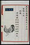 Chinese Materia Medica illustration, Ming; Red cockerel Wellcome L0039304.jpg
