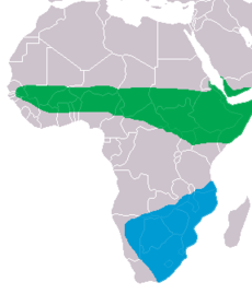 Ciconia abdimii distribution map.png