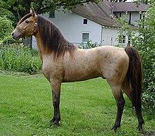 Cheval et spiritualité dans CHEVAL 220px-Classic_Champange_Stallion