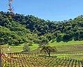 Clos la Chance Winery, Morgan Hill (I) (cropped).jpg