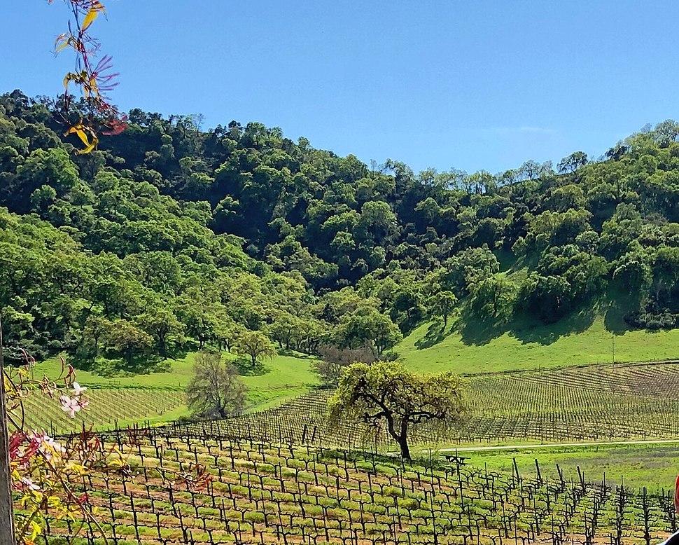 Clos la Chance Winery, Morgan Hill (I) (cropped)