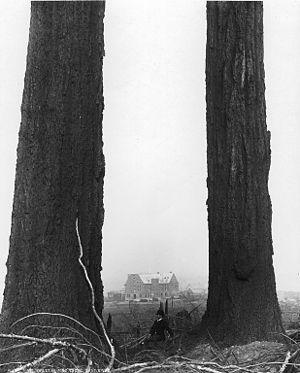 Oregon Pine (schooner) - Image: Coast Douglas fir in Vancouver 1887