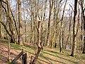 Coed Troedrhiwseiri Woodland - geograph.org.uk - 769535.jpg