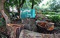 Community garden, Sandon Street & Falkner Street.jpg