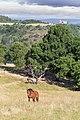Condamines Essalois cheval.jpg