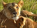 Contented Mother ! (3599528159).jpg