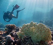 Outline of underwater diving - Wikipedia