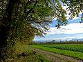 Cossonay-L'Isle - Bois du Sépey 32.jpg