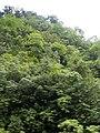 Costa Rica (6090797888).jpg
