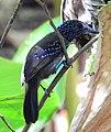 Costa Rica DSCN1316-new (31093357476).jpg