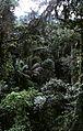 Costa Rica Rain Forest - panoramio.jpg
